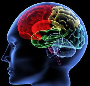 4.110414 hersenen